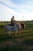 rechtrichten paard, moeilijk paard, natural horsemanship, natural horsemanship cursus gelderland