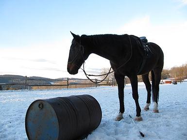 leren paardrijden, aanbod paardrijles, natural horsemanship lessen, natural horsemanship cursus, paardrijles kinderen
