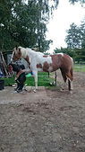angst voor paarden overwinnen, natural horsemanship, natural horsemanship cursus gelderland, leren paardrijden gelderland