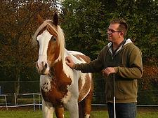 wat is natural horsemanship, natural horsemanship lessen, natural horsemanship cursus, paardenfluisteraar, natural horsemanship gelderland, paardrijschool