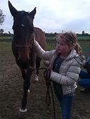 angst voor paarden overwinnen, natural horsemanship, natural horsemanship cursus, natural horsemanship lessen gelderland didam