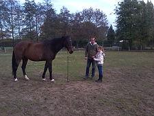 natural horsemanship oefeningen, natural horsemanship cursus gelderland, natural horsemanship lessen, aanbod paardrijles