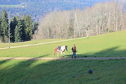 wanzenried michael, paardenfluisteraar gelderland, natural horsemanship, natural horsemanship lessen gelderland, natural horsemanship cursus gelderland, wanzenreid michael, paardenfluisteraar