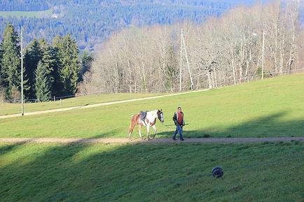 wat is natural horsemanship, natural horsemanship lessen, natural horsemanship cursus, paardenfluisteraar, natural horsemanship gelderland