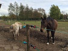 steigerend paard, moeilijk paard, schoppend paard, bijtend paard, natural horsemanship lessen gelderland