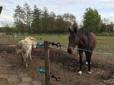 schoppend paard, moeilijk paard, schoppende paarden, natural horsemanship gelderland, schoppent paard