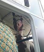 trailer laden probleem, trailerladen, cursus trailer laden, paard in trailer, moeilijk paard