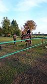 paardrijles, paardrijles gelderland, aanbod paardrijles, kosten paardrijles