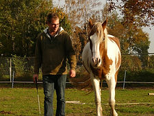 beter leiderschap, coachend leidinggeven, natural horsemanship lessen gelderland, cursus leidinggeven