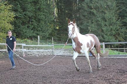 moeilijk paard, natural horsemanship cursus gelderland, natural horsemanship lessen gelderland, paardenfluisteraar