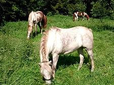 sitemap, natural horsemanship gelderland, natural horsemanship cursus gelderland, natural horsemanship lessen gelderland, didam