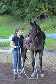 natural horsemanship vs true horsemanship, paardrijschool gelderland, kosten paardrijles