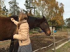 leren omgaan met paarden, cursus band opbouwen met je paard, natural horsemanship cursus gelderland, paardrijlessen, paardrijles kinderen