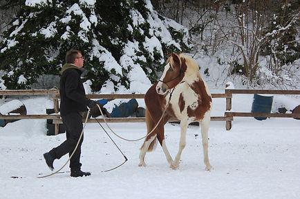 wanzenried michael, paardenfluisteraar, natural horsemanship, natural horsemanship lessen gelderland, natural horsemanship cursus gelderland, paardrijles kinderen