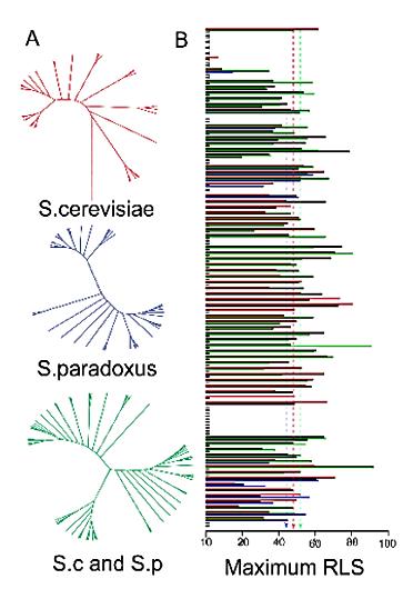 pylogentic tree of yeast isolates.PNG
