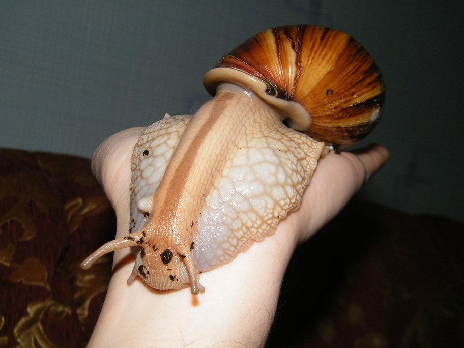 snail-1562796_1920.jpg