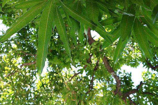leaves-2857368_1920.jpg