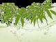 Обложка статья бамбук.png