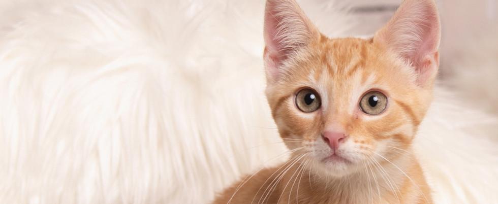 kitty-orange.jpg
