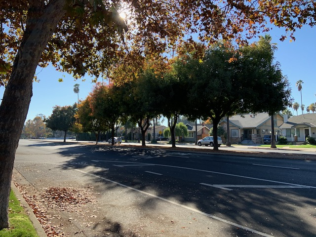 Trees along Bird Avenue, San Jose