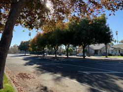 Trees along Bird Avenue, San Jose