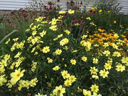 My garden in Arlington