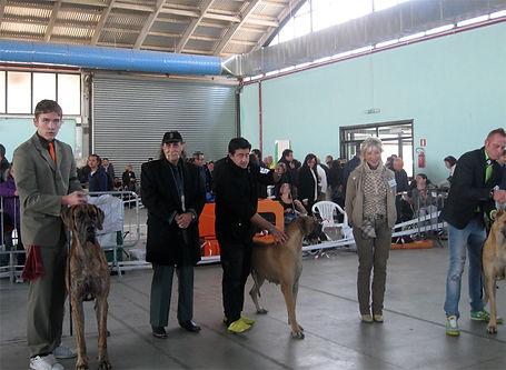 foggia-2011.jpg