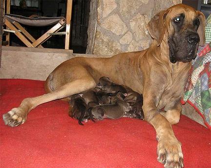 Cuccioli-musa-leggera.jpg