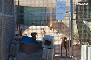 Noah's Ark Dog Sanctuary