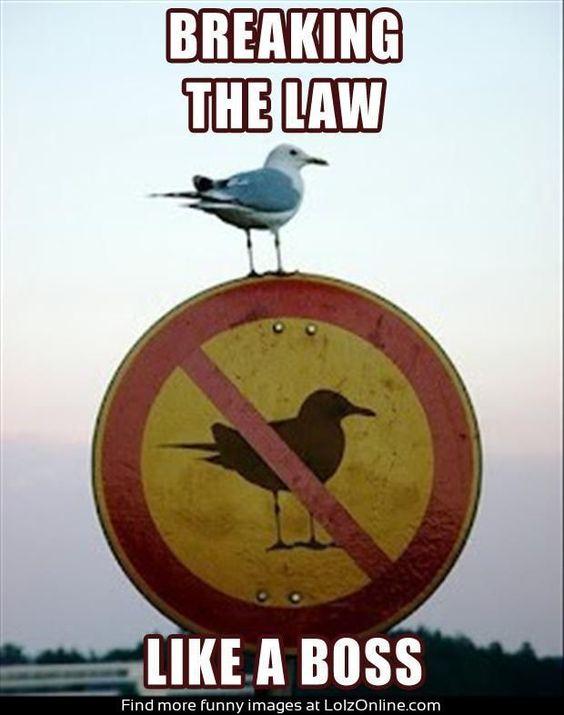 Beware Birds!