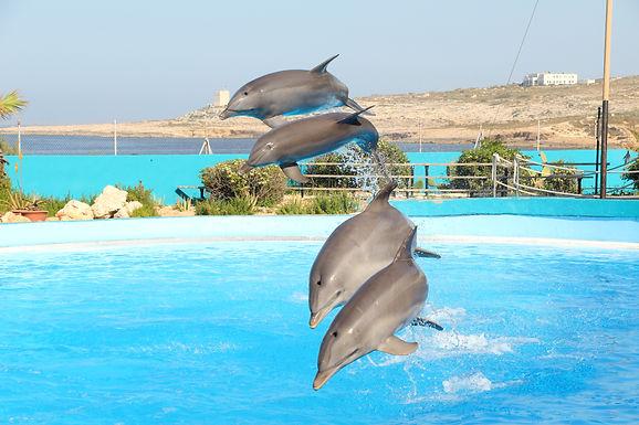 Mediterraneo Marine Park