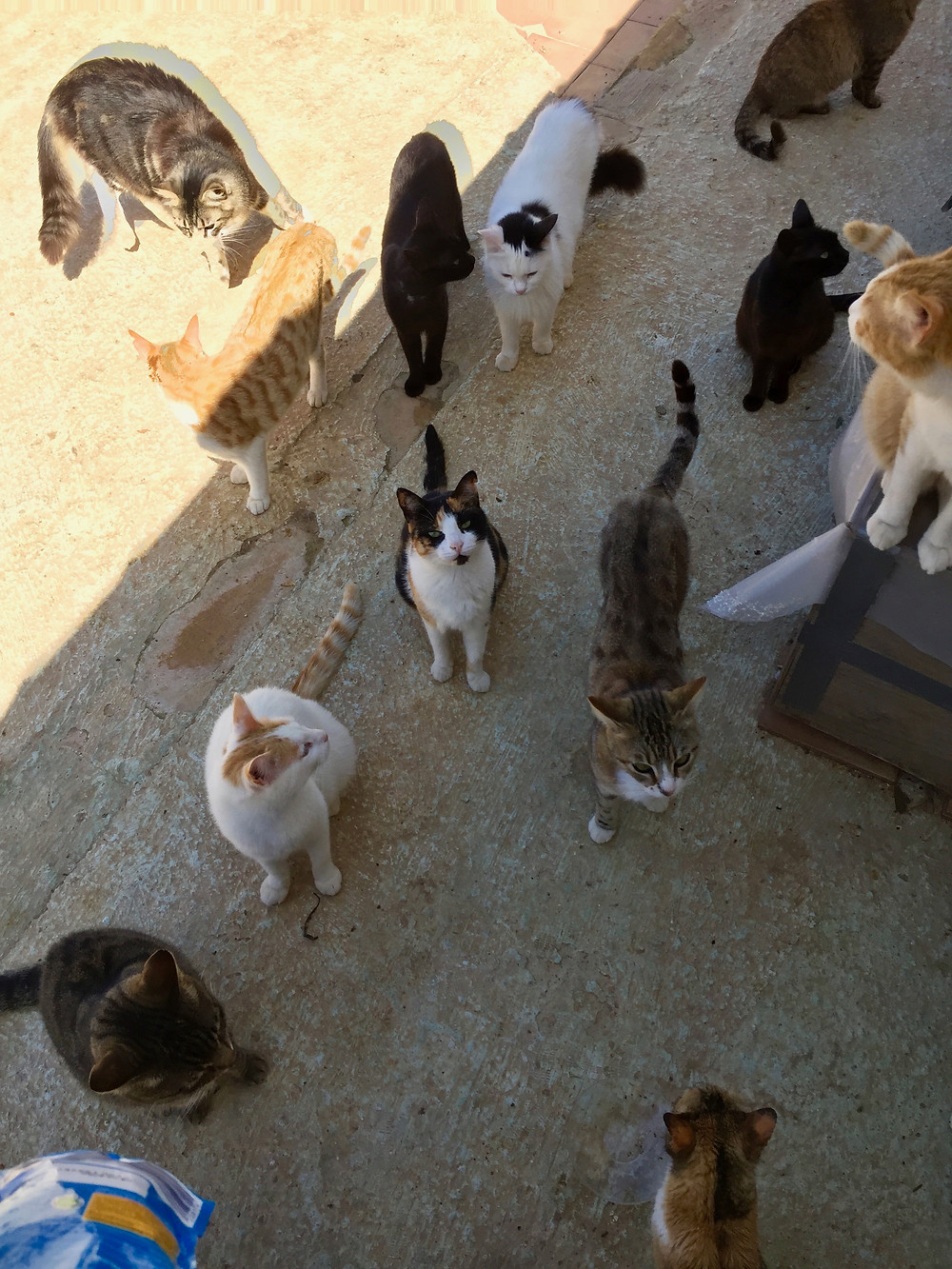 cat sanctuary