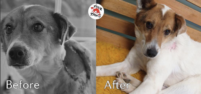 """Introducing International Animal FOUR PAWS"""" N01 Charity... Here Is Why!"""