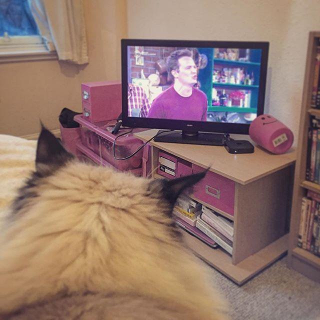 Netflix Account watching friends