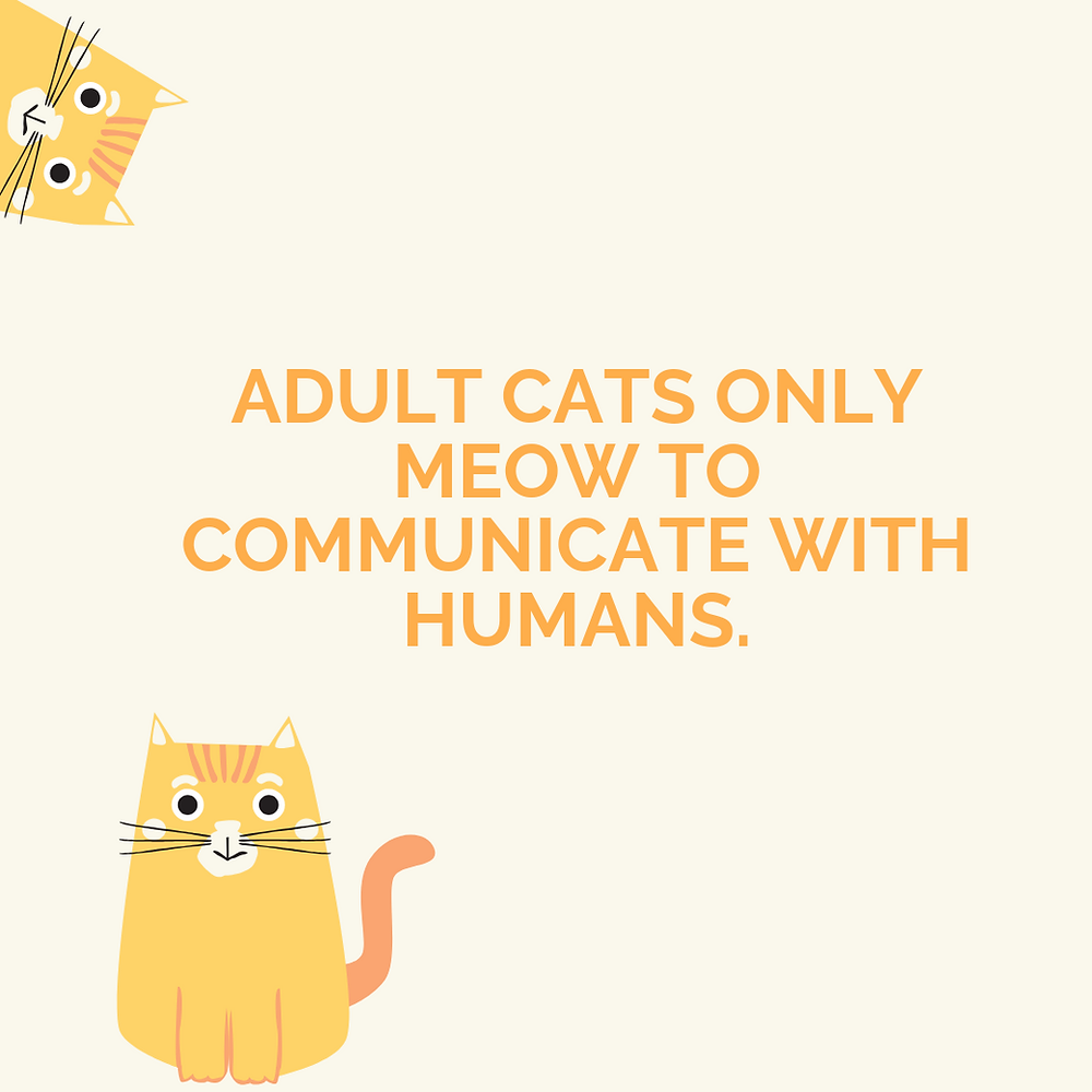 Facts About Your Cats