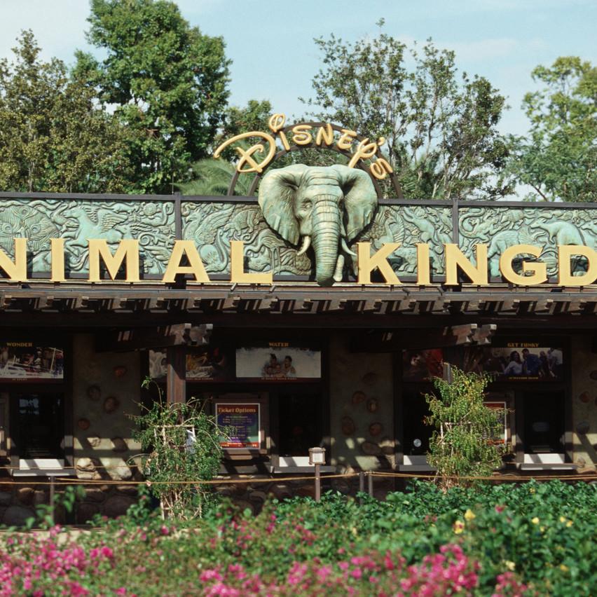 Welcome to Animal Kingdom
