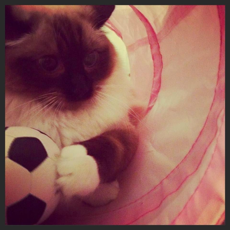 Pancakes - My cat