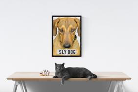 SLY Dog cat.jpg