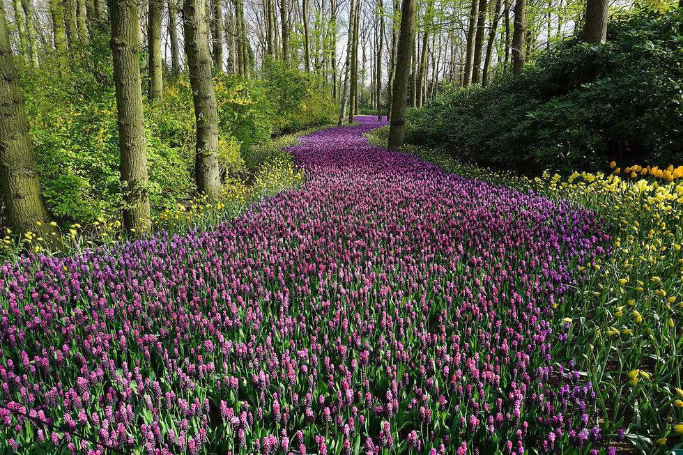lavender field2.jpg
