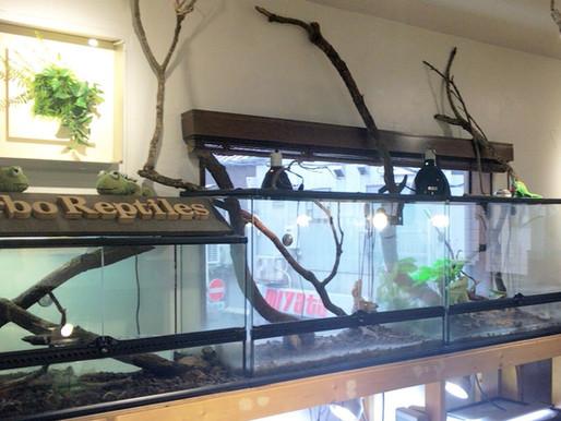 爬虫類カフェに行きました