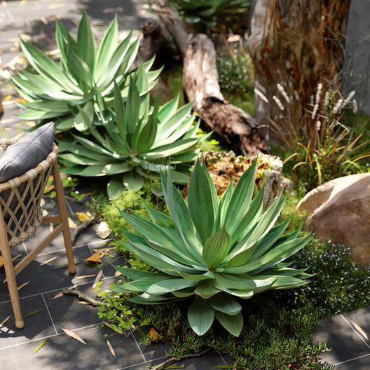 plant focus.jpg