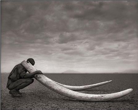 Are Elephants Endangered?