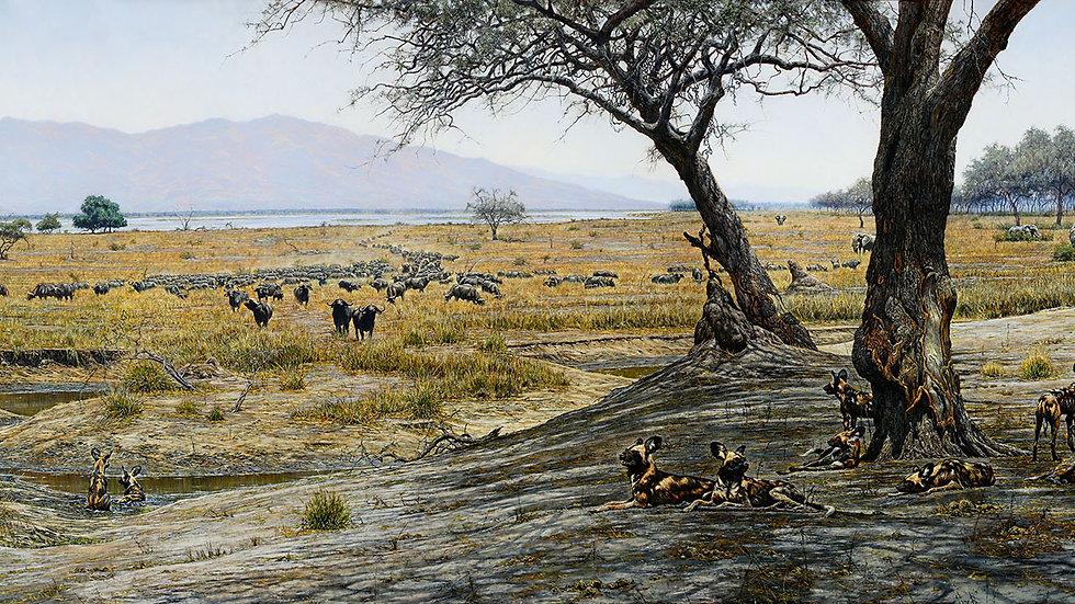 African savanna print