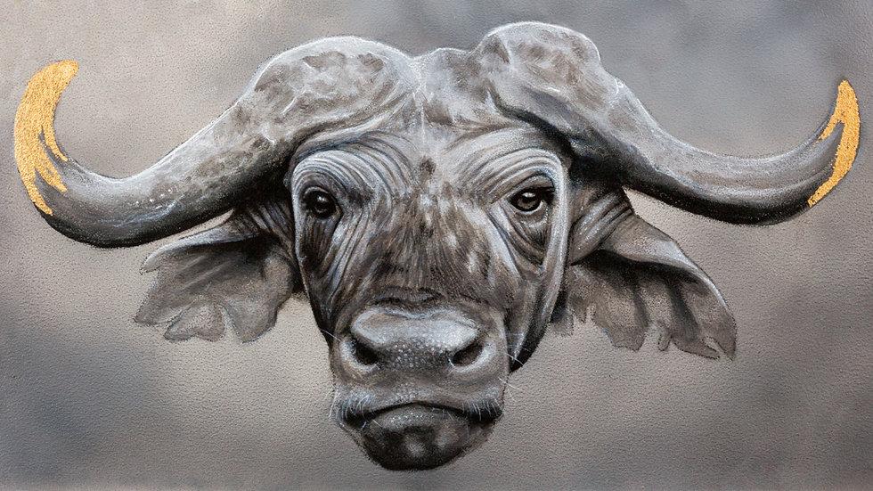 'Cape Buffalo' (30 x 21 cm)