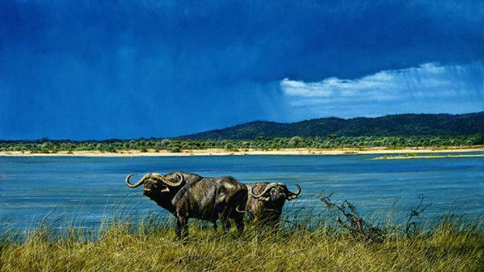 Cape buffalo print