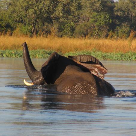 Elephant catastrophe of Mozambique
