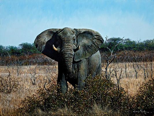 kabakwe famous bull elephant oil painting by larry norton