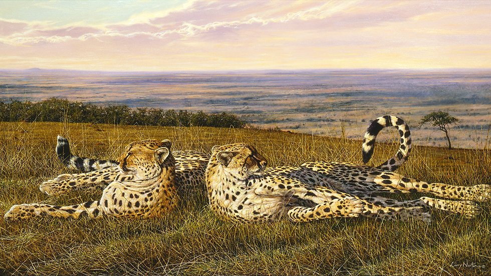 limited edition cheetah print