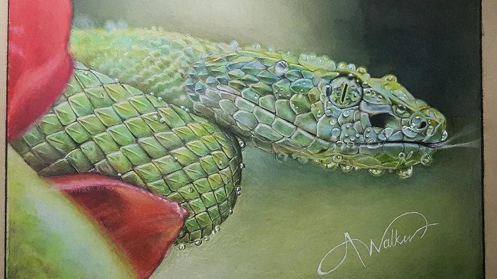 'Snake' Fine Print on Canvas