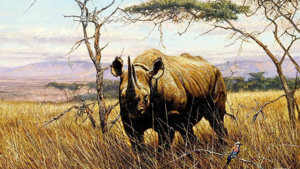 Black Rhinoceros print
